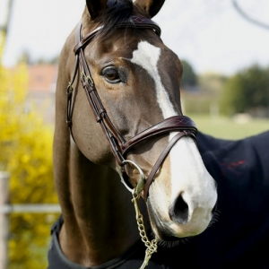 Dy'on Bridles